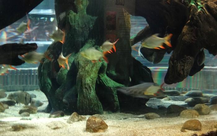 Aquarium_Fish2