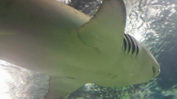 SharkOverhead