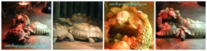 Tortoise_CLE_Aquarium