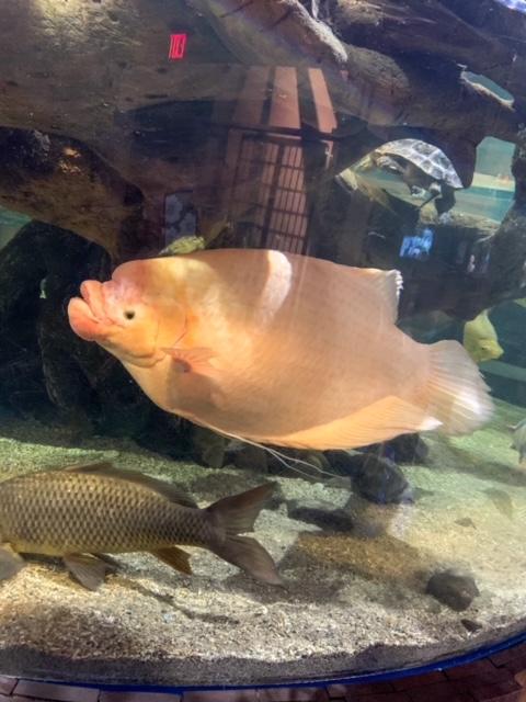 Greater Cleveland Aquarium